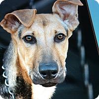 Adopt A Pet :: BRIGITTE VON BRITZ - Los Angeles, CA