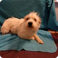 Adopt A Pet :: Abby - Vacaville, CA