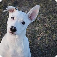 Adopt A Pet :: Spot - Parker, CO