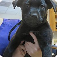 Adopt A Pet :: Reagan - $250 - Seneca, SC