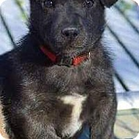 Adopt A Pet :: Wyss *AVAILABLE 4/13/16* - Pleasant Plain, OH