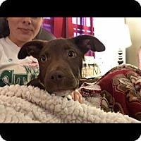 Adopt A Pet :: Jovi - Albemarle, NC