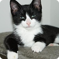 Adopt A Pet :: Travis (Bonded to Atalanta) - Richmond Hill, ON