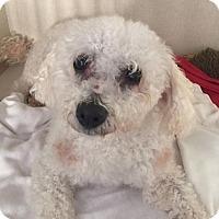 Adopt A Pet :: Fritz - Sparta, NJ