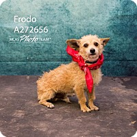 Adopt A Pet :: FRODO - Conroe, TX