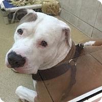 Adopt A Pet :: Hennie - Miami, FL