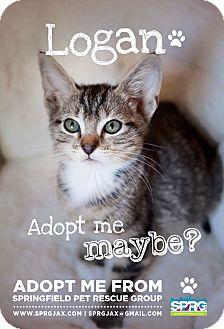Domestic Shorthair Kitten for adoption in Jacksonville, Florida - Logan