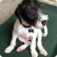 Adopt A Pet :: Horton - Houston, TX