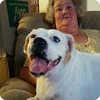 Adopt A Pet :: Daisy Mae - Charlotte, NC