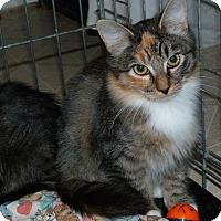 Adopt A Pet :: Topaz - Stafford, VA