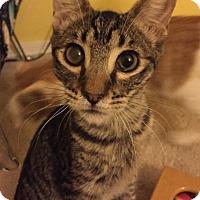 Adopt A Pet :: Mouth - Chandler, AZ