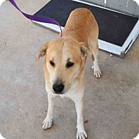 Adopt A Pet :: Tucker - Newnan City, GA