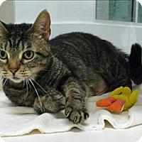 Adopt A Pet :: Sydney - Topeka, KS