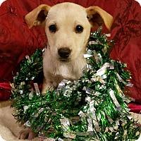Adopt A Pet :: Pearl (James MD-DE) - Newark, DE
