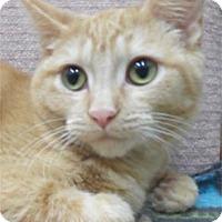 Adopt A Pet :: Emmi - Waupaca, WI