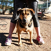 Adopt A Pet :: Dutch - Acton, CA