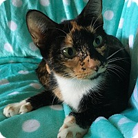 Adopt A Pet :: Vienna - Tampa, FL