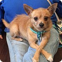 Adopt A Pet :: Shaggy - Aurora, IL