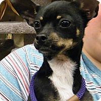Adopt A Pet :: Gizmo - Macon, GA