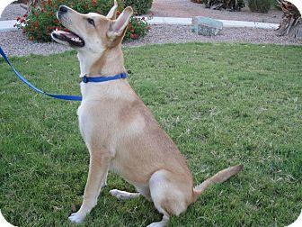 Carolina Dog Mix Dog for adoption in Cranston, Rhode Island - Codi - ADOPTED!!!!