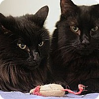 Adopt A Pet :: Casey and Storm - Columbia, MD