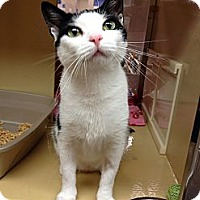 Adopt A Pet :: Citrine - Farmingdale, NY