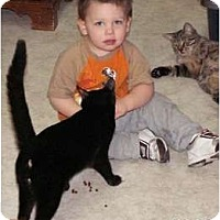 Adopt A Pet :: Maynard - Milford, OH
