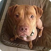 Adopt A Pet :: Gracie - Tallahassee, FL