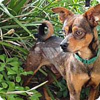 Adopt A Pet :: Winchester - Mission Viejo, CA