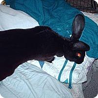 Adopt A Pet :: Zeta - Maple Shade, NJ