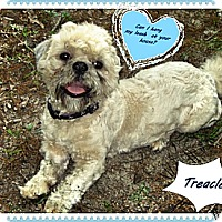Adopt A Pet :: Treacle - Franklinton, NC