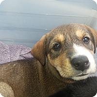 Adopt A Pet :: Lily - Calgary, AB