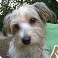 Adopt A Pet :: Pilot#2M - Orlando, FL