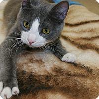 Adopt A Pet :: Yoshi - Trevose, PA