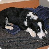 Adopt A Pet :: Ranger - Phelan, CA