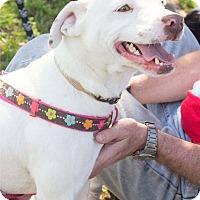 Adopt A Pet :: Chandler - Baltimore, MD