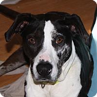 Adopt A Pet :: Bijou - Marion, AR