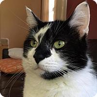 Adopt A Pet :: Annie - Springfield, PA