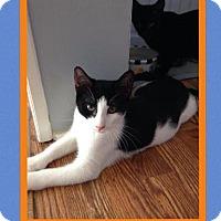 Adopt A Pet :: Scout - East Brunswick, NJ