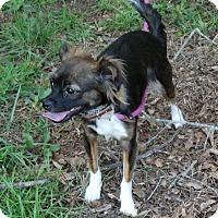 Adopt A Pet :: Cooper - Lebanon, CT