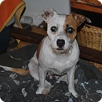 Adopt A Pet :: Olive 2 - San Francisco, CA