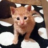 Adopt A Pet :: Manuel - Austin, TX