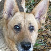 Adopt A Pet :: Sasha(CL) - Greensboro, NC