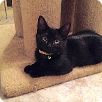 Adopt A Pet :: Denim - Colmar, PA