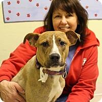 Adopt A Pet :: Paris-Prison Graduate - Elyria, OH