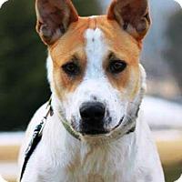 Adopt A Pet :: Dante - Gettysburg, PA