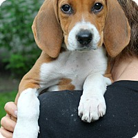 Adopt A Pet :: Squirtle - Mt. Prospect, IL