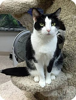 Domestic Shorthair Cat for adoption in Byron Center, Michigan - Lucille