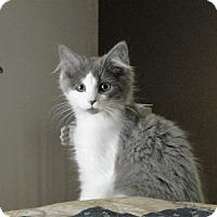 Adopt A Pet :: Harvest - North Wilkesboro, NC