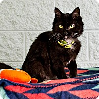 Adopt A Pet :: Twist - Logan, UT